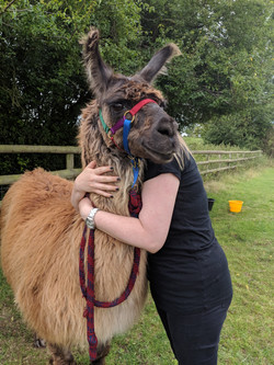 Guest hugging llama