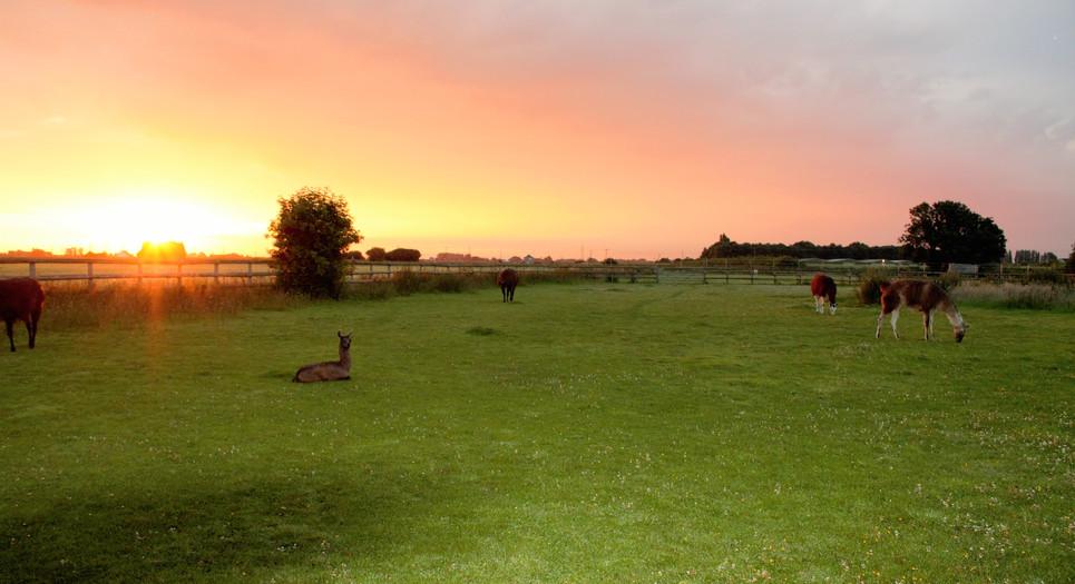 Stunning sunrises at Faster Lente Llamas