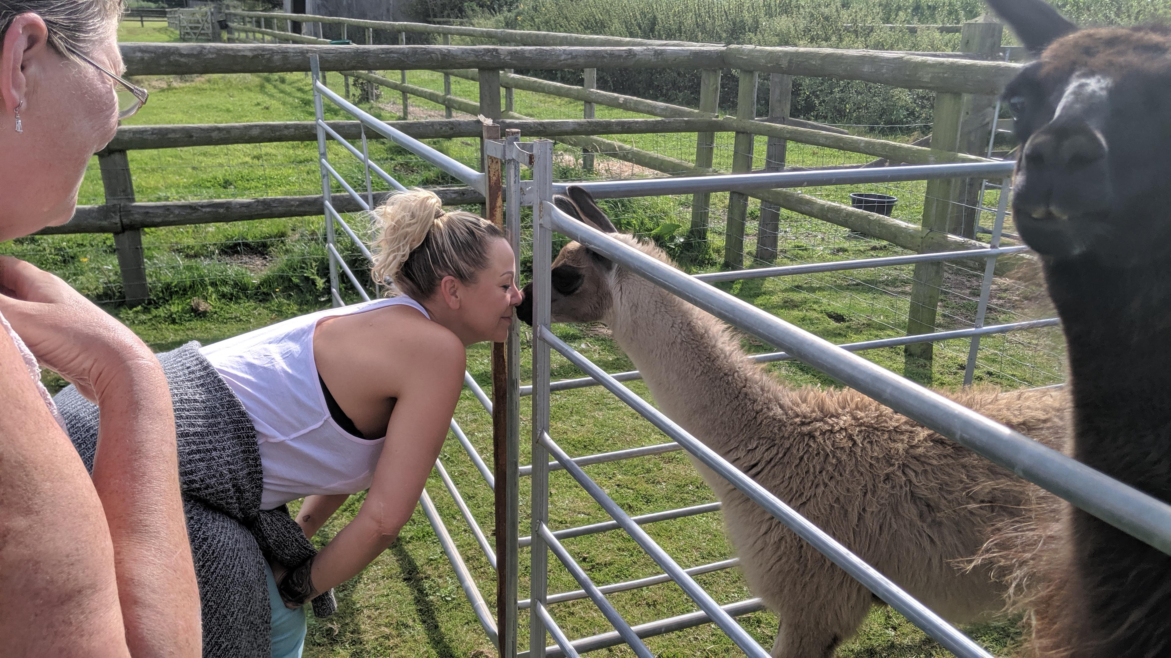 Llamas like to smell human faces