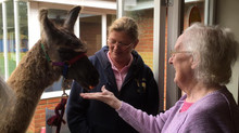 Pharaoh visits Lyncroft Care Home