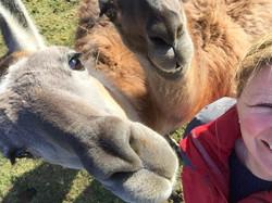 Llama up-selfie