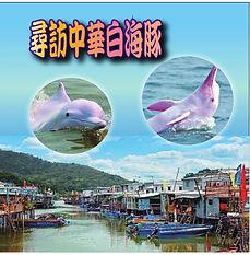 尋訪中華白海豚一天遊