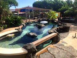 Sea Life Park Shark Pool