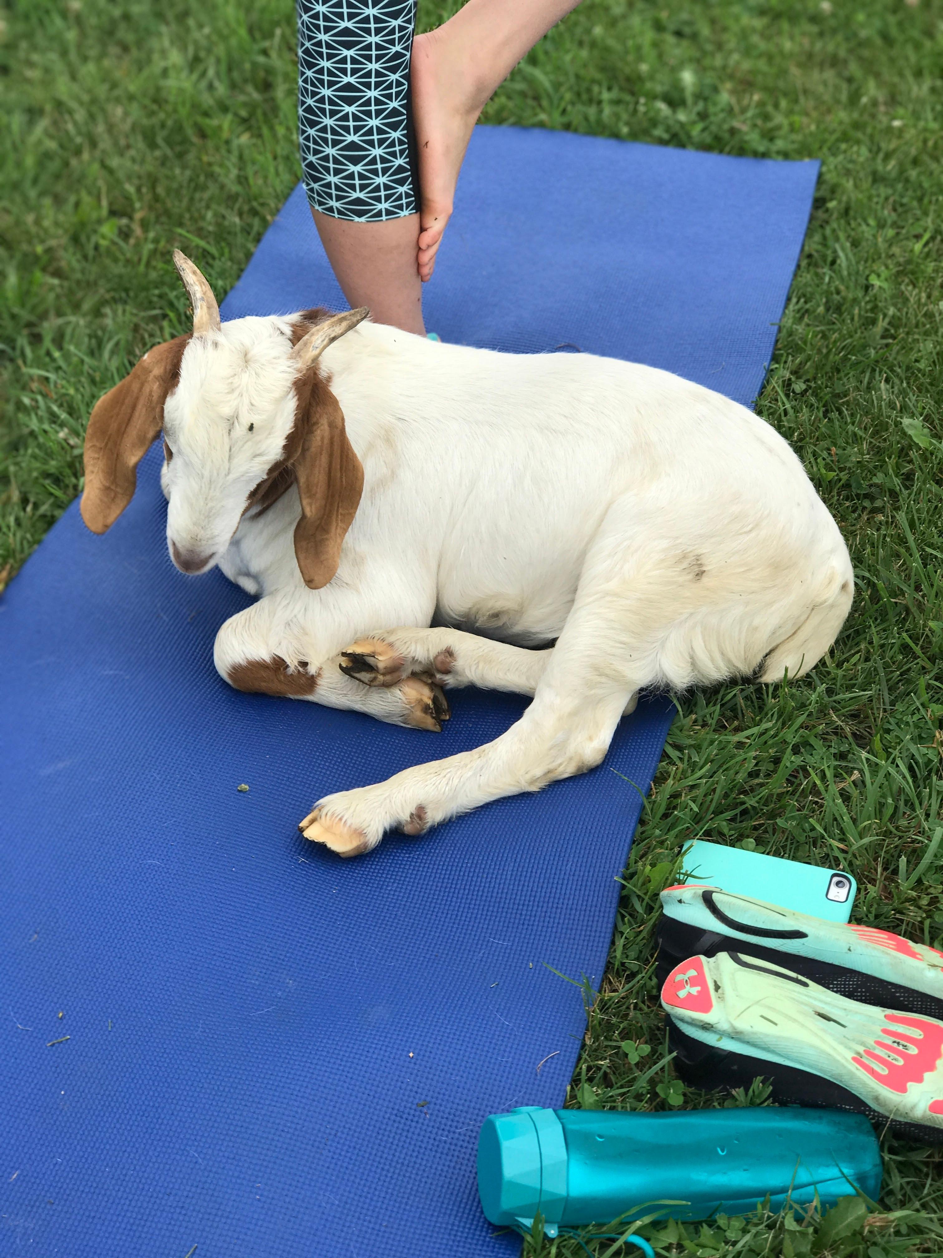 Private Goat Yoga (5-10)