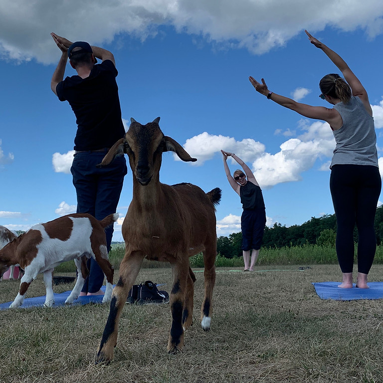 Goat Yoga on the Homestead