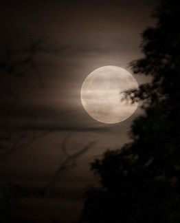 Full Moon- sign up for Full Moon Yoga