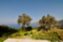 Olive trees on a hill with sea behind