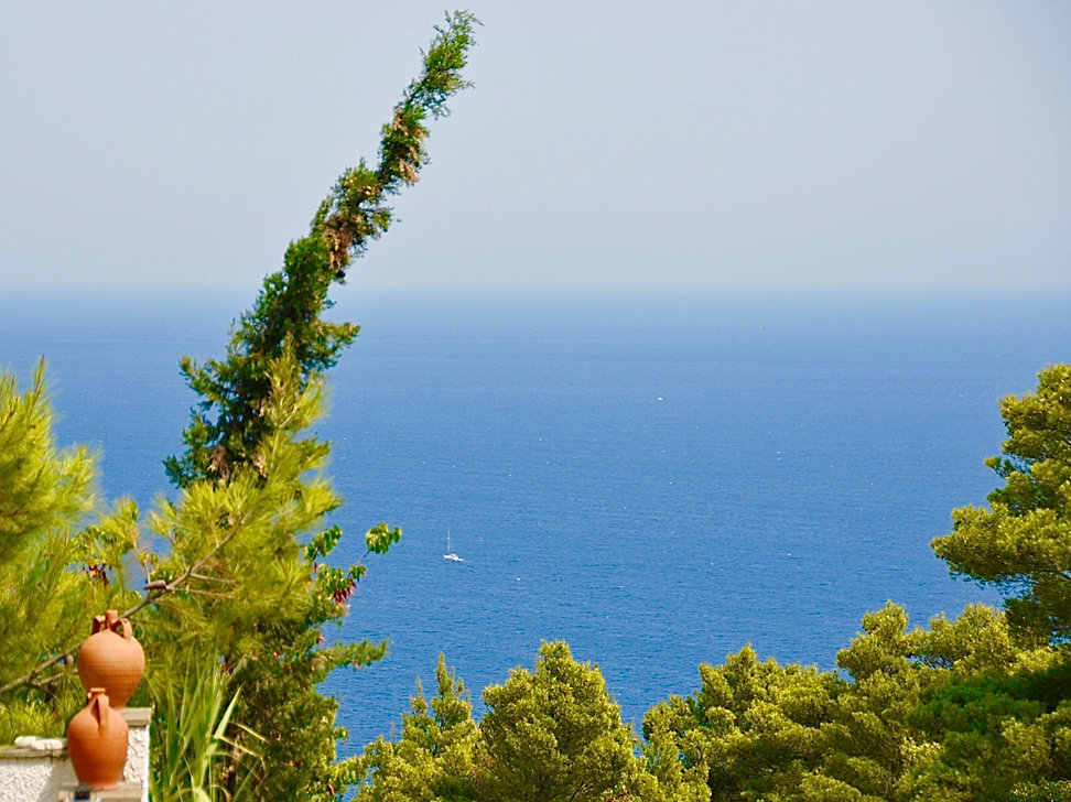 Stunning sea view with tree in foreground