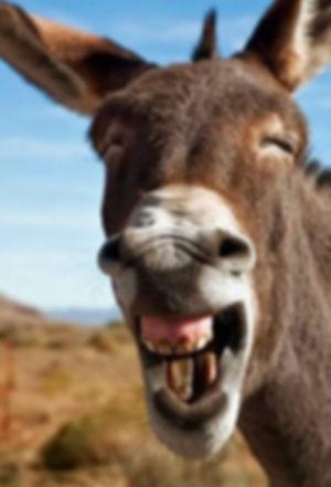 Donkey smiling