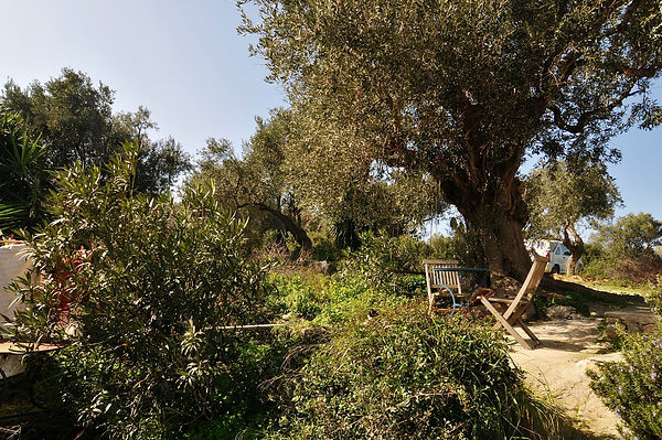 Table and chairs under olive tree
