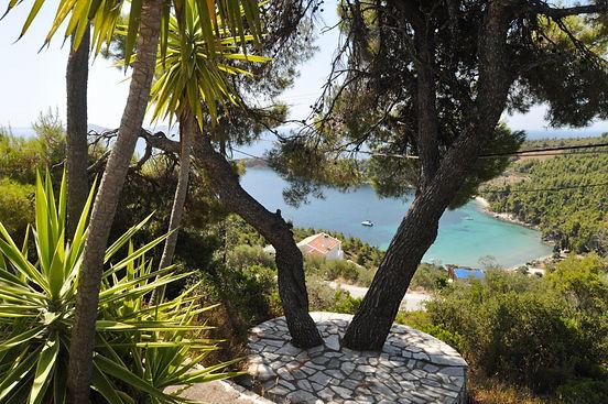 Sea Views between the Pine Tree