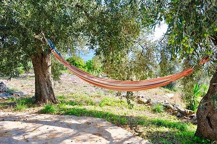 Hammock between two olive trees.