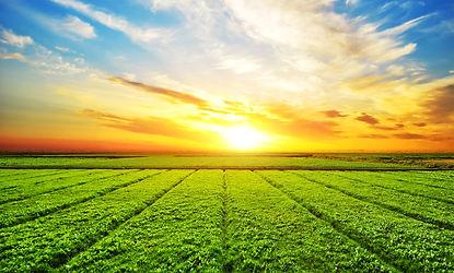 sunny-meadow-landscape.jpg