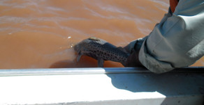 Paraná proíbe pesca durante crise hídrica
