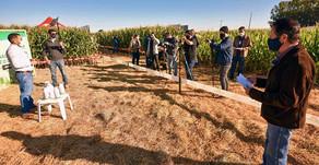 C.Vale realiza primeiro Dia de Campo Digital sobre Milho Safrinha