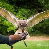Falconry at Ashford Castle