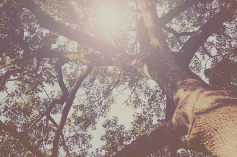 arbre, soleil, douceur