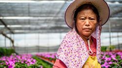 Xichang Flower Grower