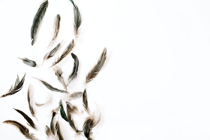 Depositphotos_143215279_xl-2015 Feathers