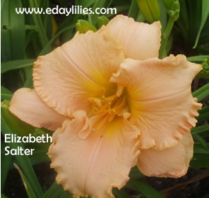 ELIZABETH SALTER