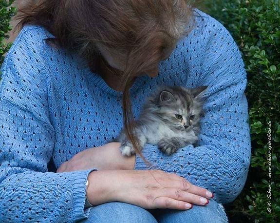 Sibirisches Katzenbaby