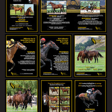 Tommy Town Thoroughbreds ads