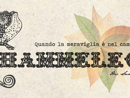 Chammeleon - quando la meraviglia è nel cambiamento.