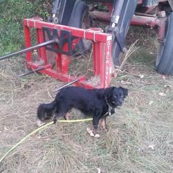 Cissie Baby on Mae's family farm
