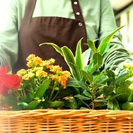 Fresh & Lifelike Artificial Florals & Greenery
