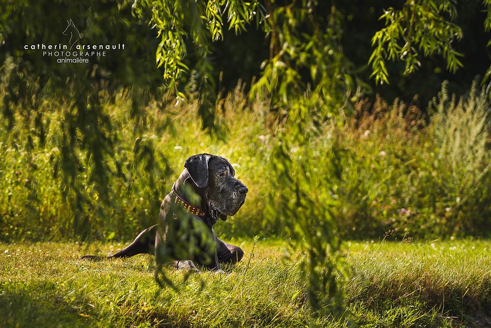 © Tous droits réservés Catherin Arsenault photographe animalière
