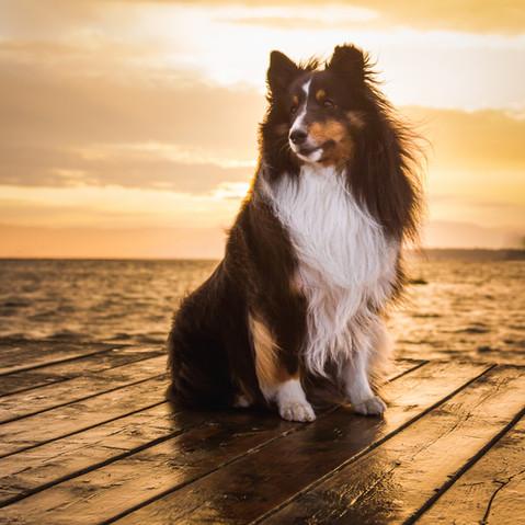 photographe professionnelle pour chiens