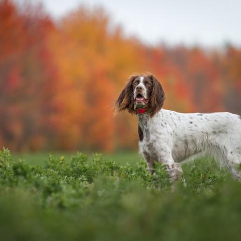 photographe professionnelle pour animaux