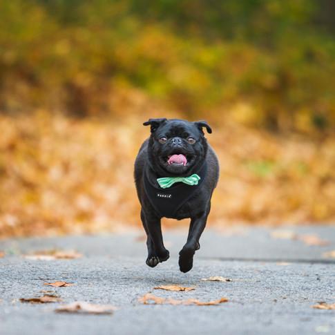 photographe chien Québec