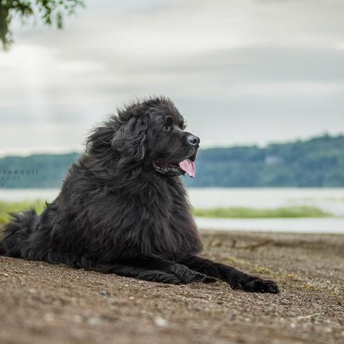 photographe pour chiens Montréal Québec