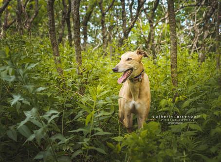 Loki | Catherin Arsenault | photographe animalière