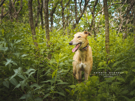 Loki | Catherin Arsenault | photographe animalière