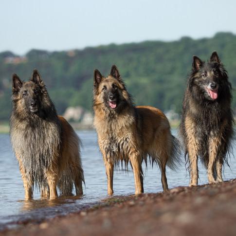 photographe pour chiens Québec