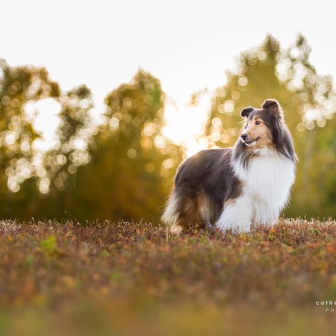 photographe pour chiens