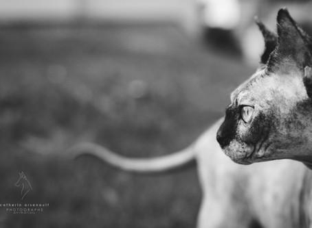 Choisir le bon photographe animalier, selon une photographe animalière