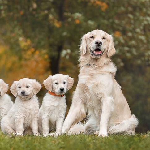 photographe canine