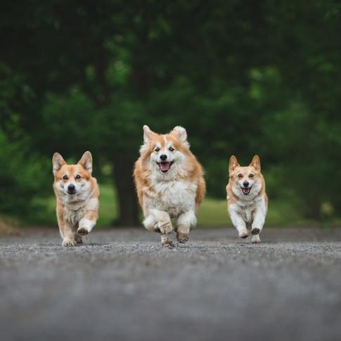 photographe animaux Québec