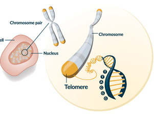 Cancer survivors have shorter lifespan due to telomere shortening finds new study