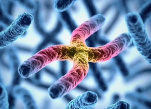 Telomere extension turns back aging clock in cultured human cells, Stanford University study finds