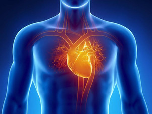 Diseased heart muscle cells have abnormally shortened telomeres