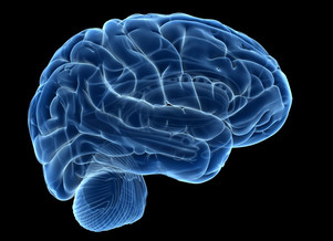 Tough Times Can Leave Their Mark on the Older Brain, New Research Suggests - It has to do with your