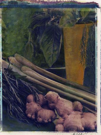 10x8 Lemon Grass.jpg