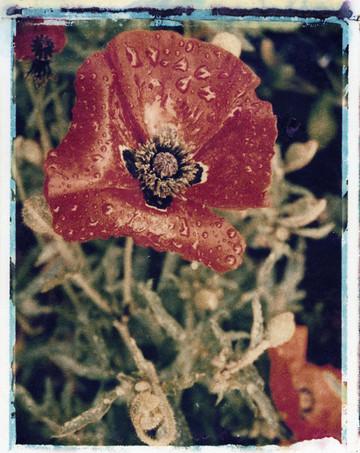 10x8 Rememberance.jpg