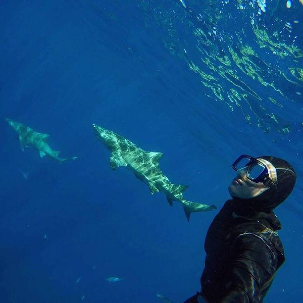 Julie Shoults DIVE ARMY PADI IDC Sharks