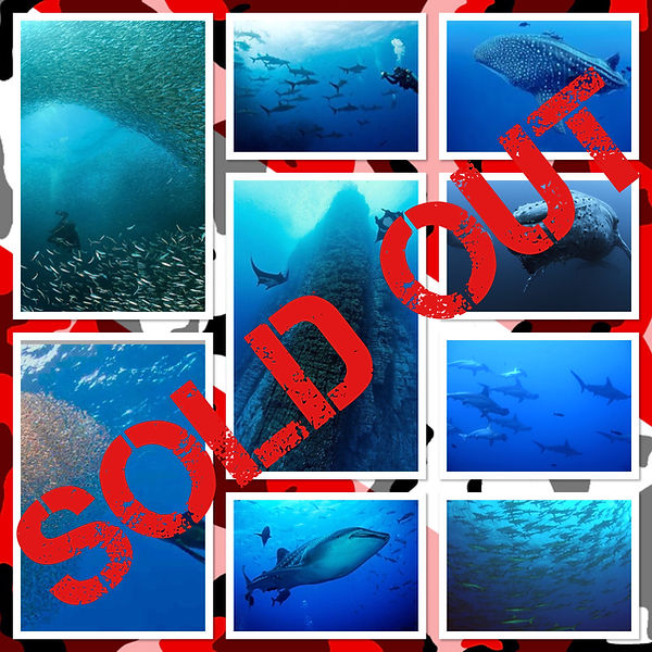 socorro sold out.jpg