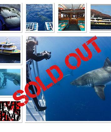 DIVE ARMY Great White Shark.jpg